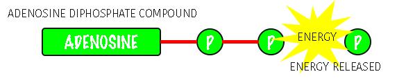 adenosine diPhosphate compound