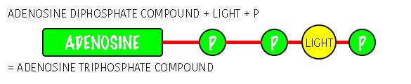 Recreating ATP Adenosine TriPhosphate Compounds